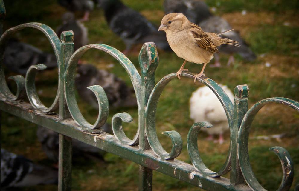 Quick Brown Sparrow – 3 June 2011
