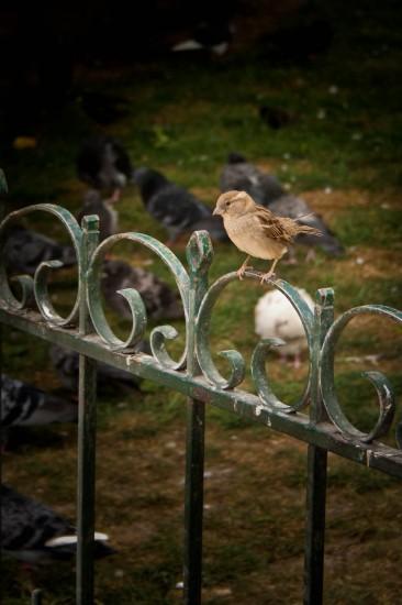 quick brown sparrow