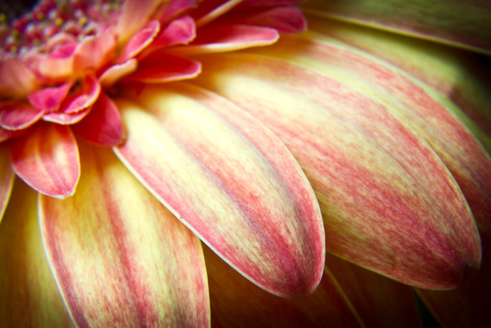 Macro Photography on Flowers
