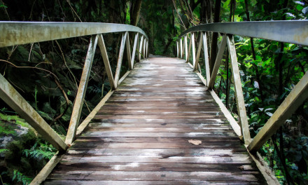 Bridge into the Rainforest Gold Coast