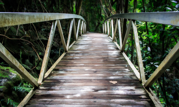 Bridge into the Rainforest Gold Coast