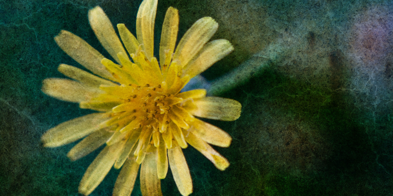 Applying Texture to your Photographs