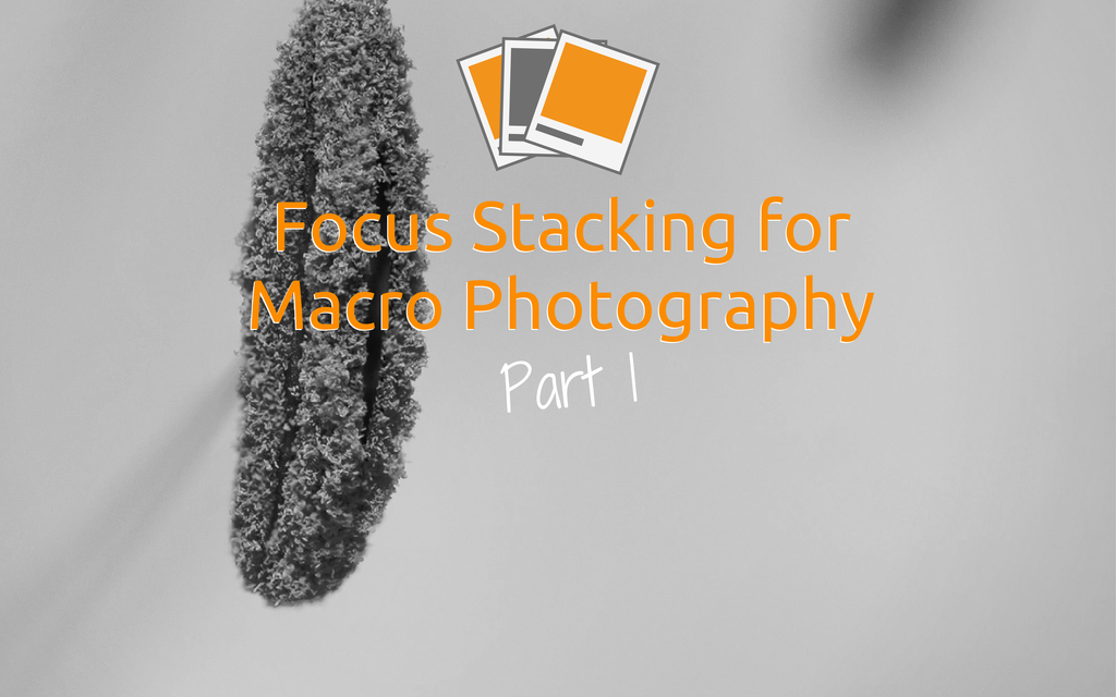 Focus Stacking for Macro Photography – Part 1