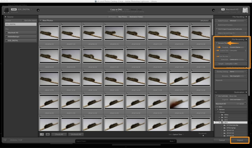 Lightroom Rename Files During Import