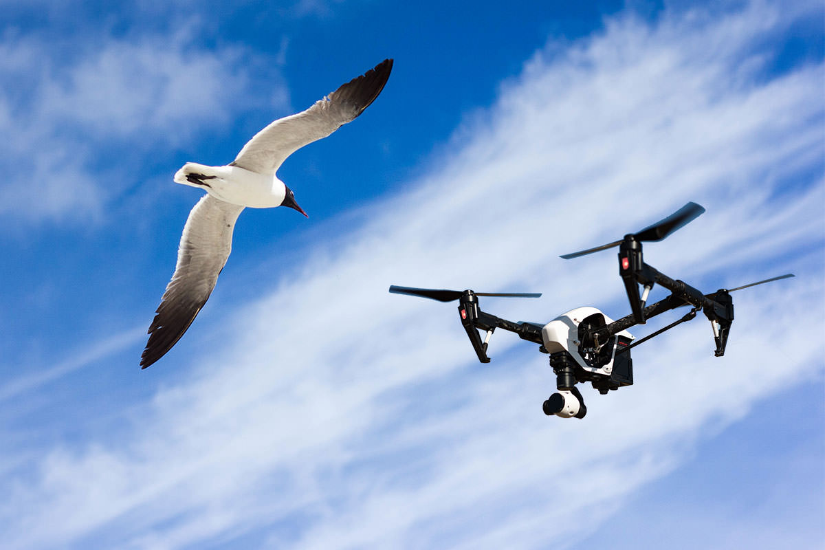 3 Useful Tips for Flying Drones Near the Coast