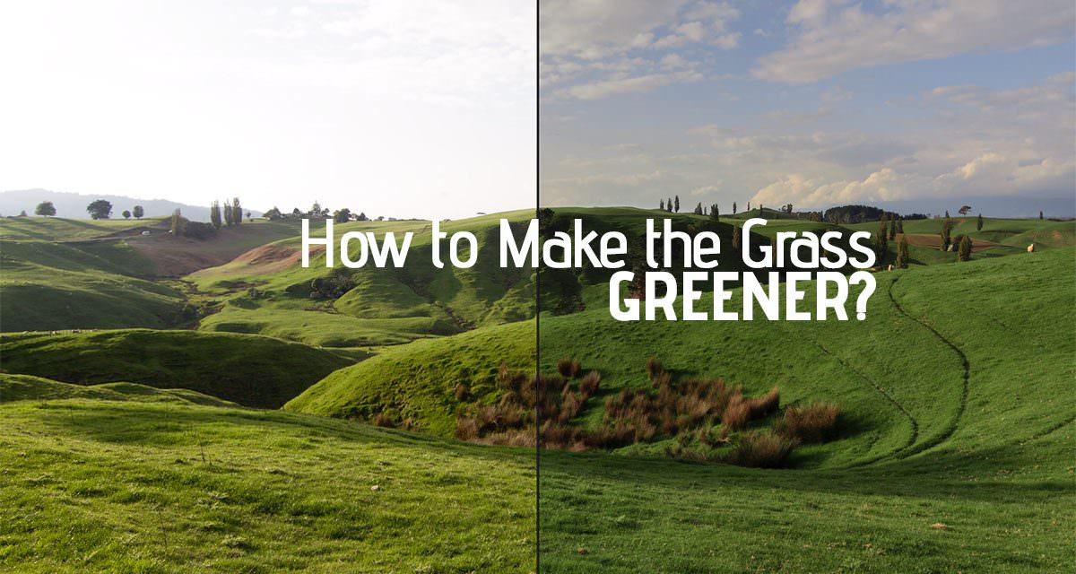 How to make the Grass Greener in Lightroom