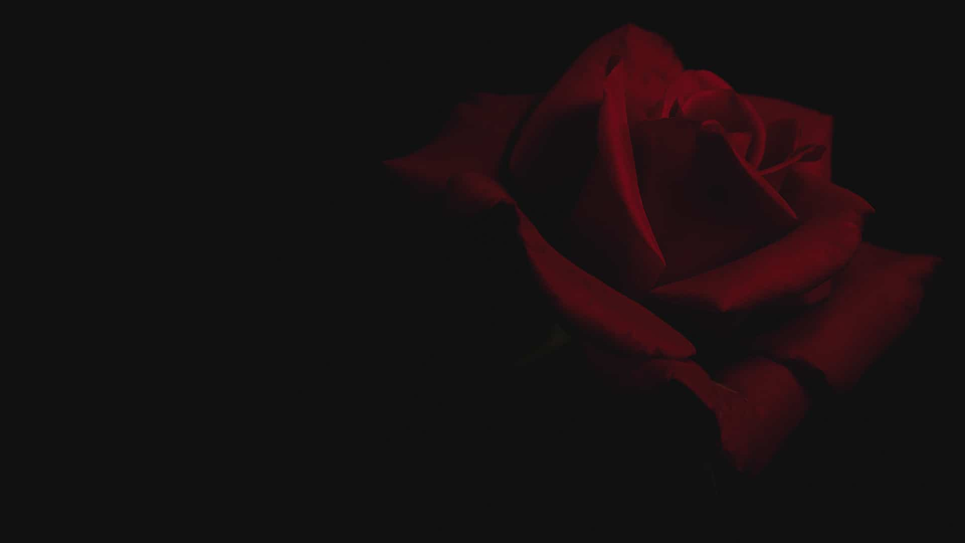 Low Key Rose – Project #2